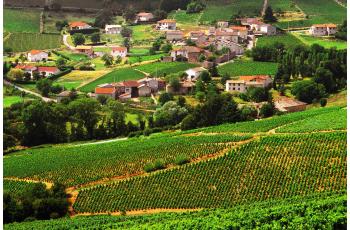 A la découverte du terroir Beaujolais