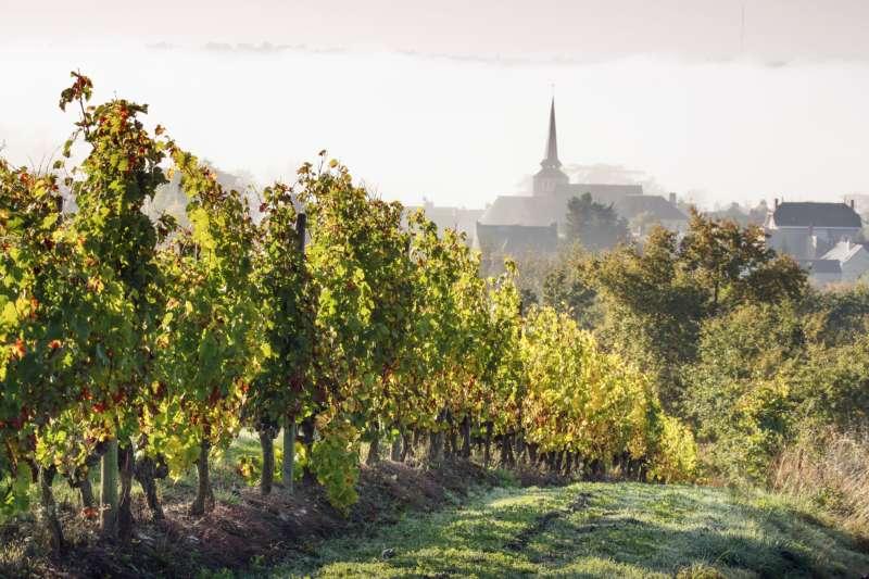Vignoble de Savennières Grand Cru du Val de Loire | Coffret cadeau en  région , BRIOLLAY