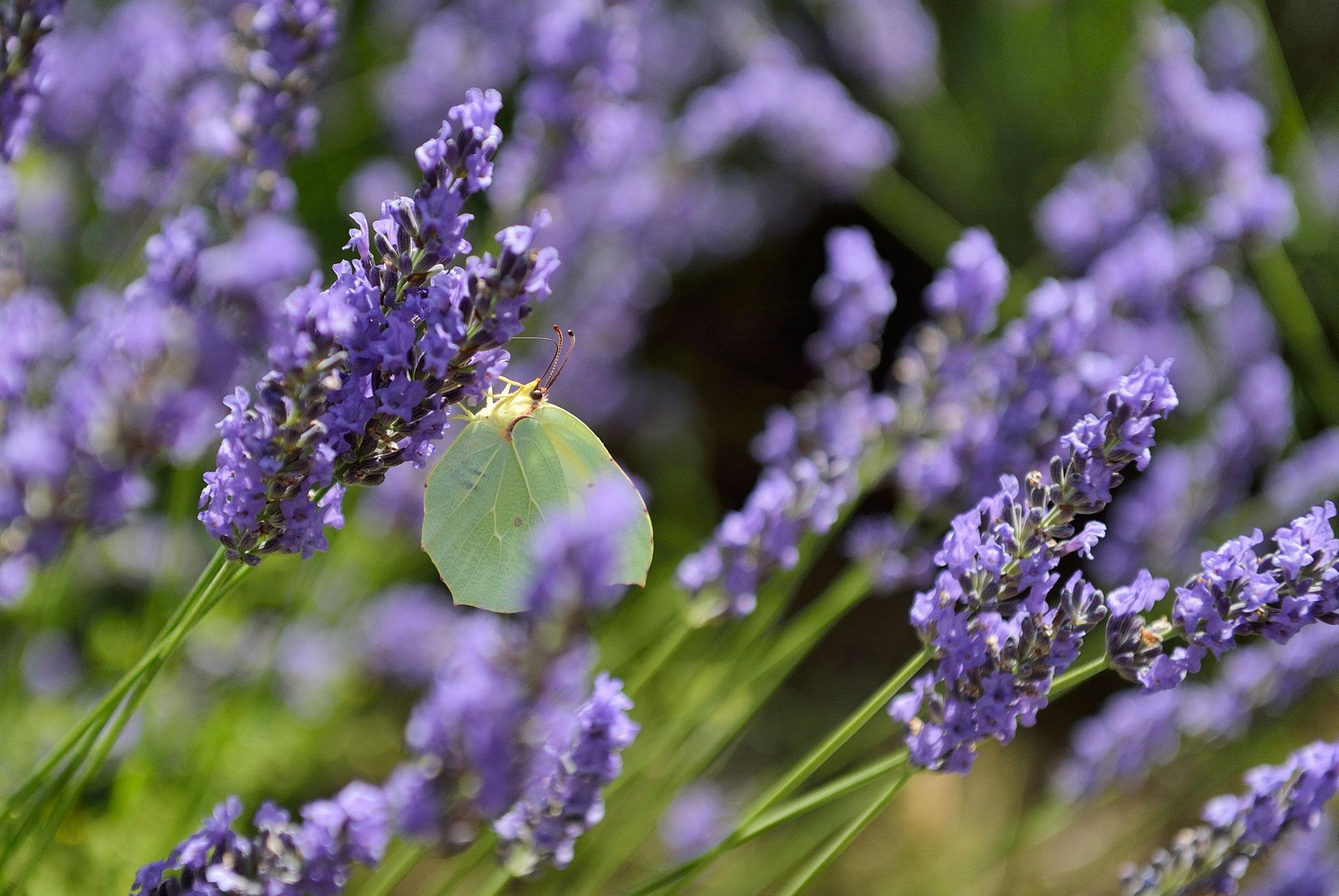 Faire le plein d'énergie et se ressourcer près des Baux de Provence